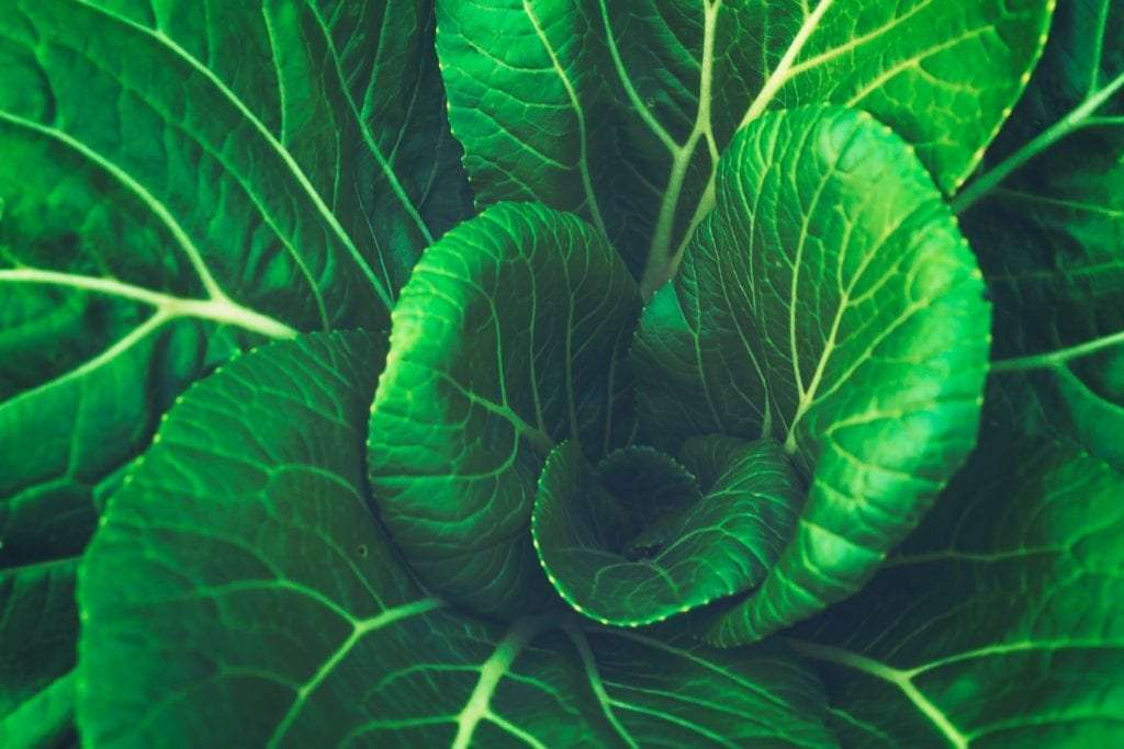 photo of leafy green