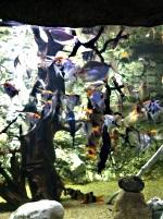 Fish tank at aquarium